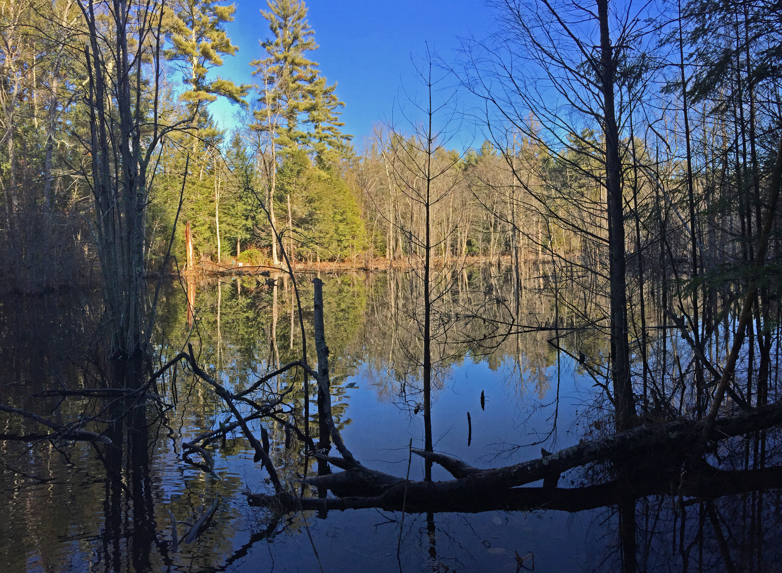 Riddle Brook Overlook