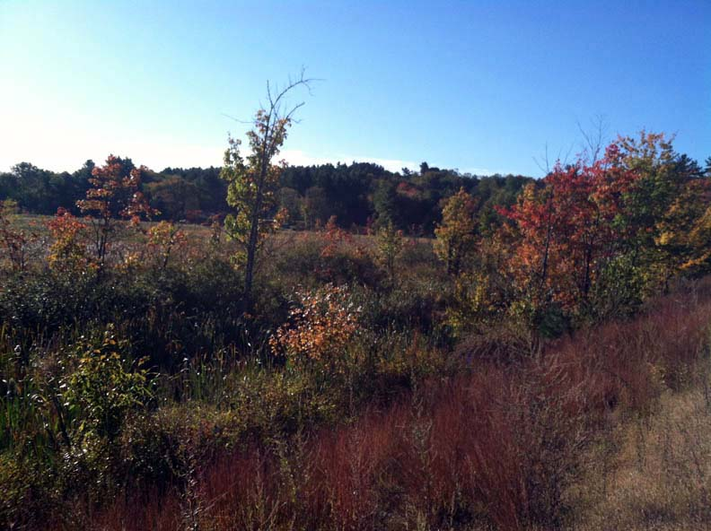 Nault Conservation Easement