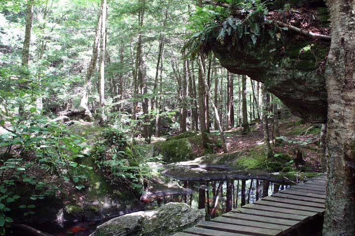 Pulpit Rock Ravine
