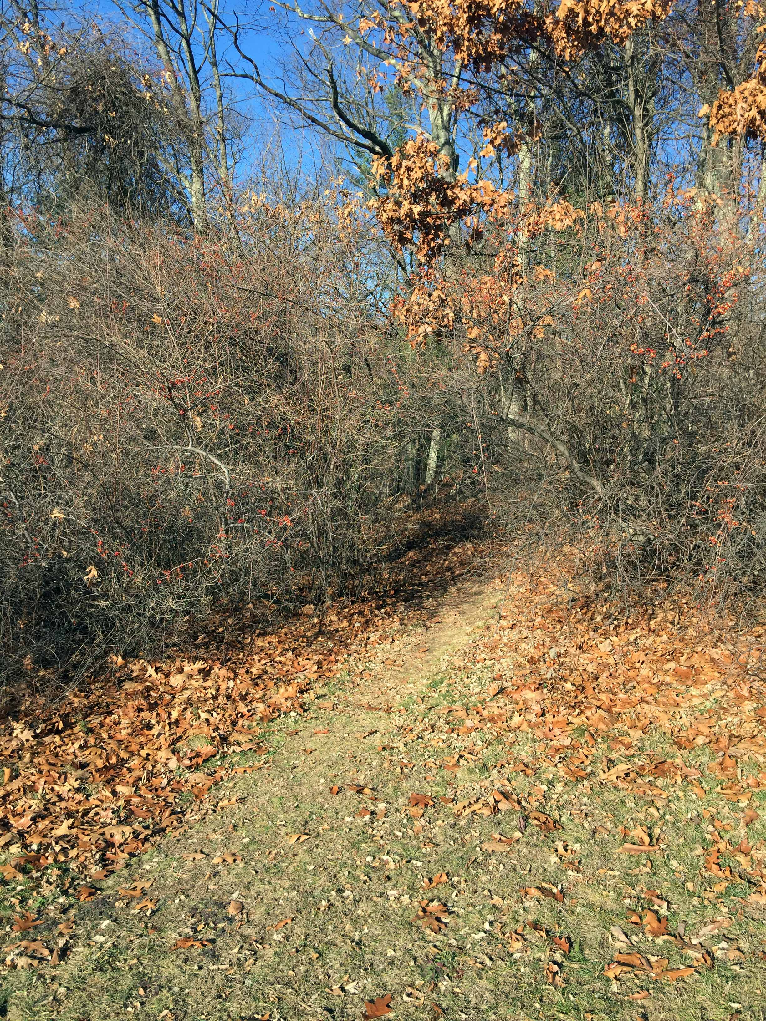 Cobb Trail entrance at northwest corner of open field