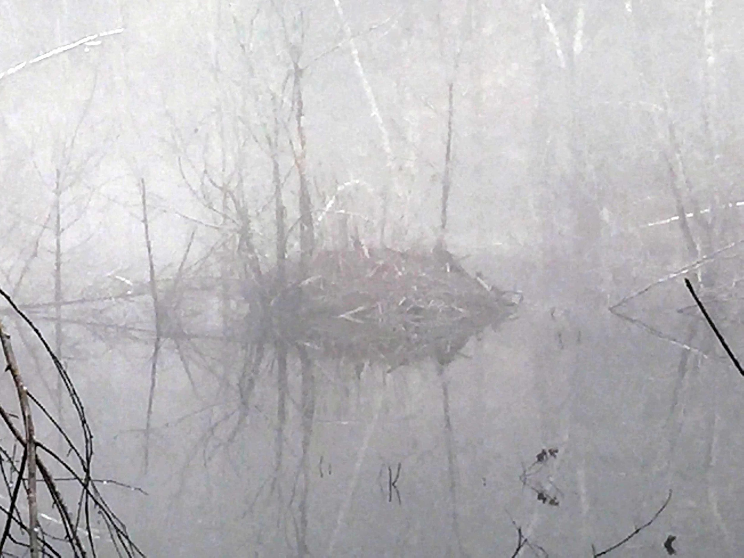 Closer view of the beaver lodge
