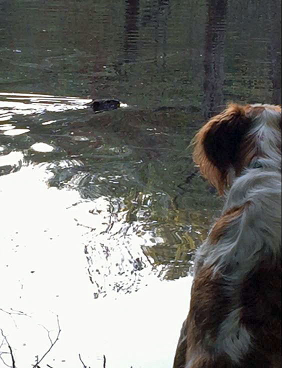 Keep an eye out for one of the resident beavers!