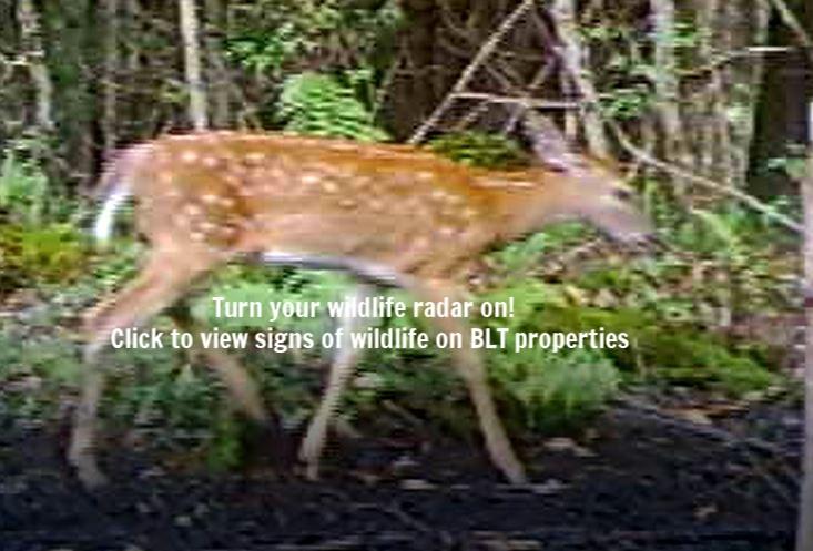 Deer fawn.JPG