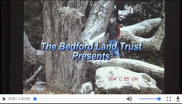 Click on the image above to view a video of Kevin's talk on BCTV