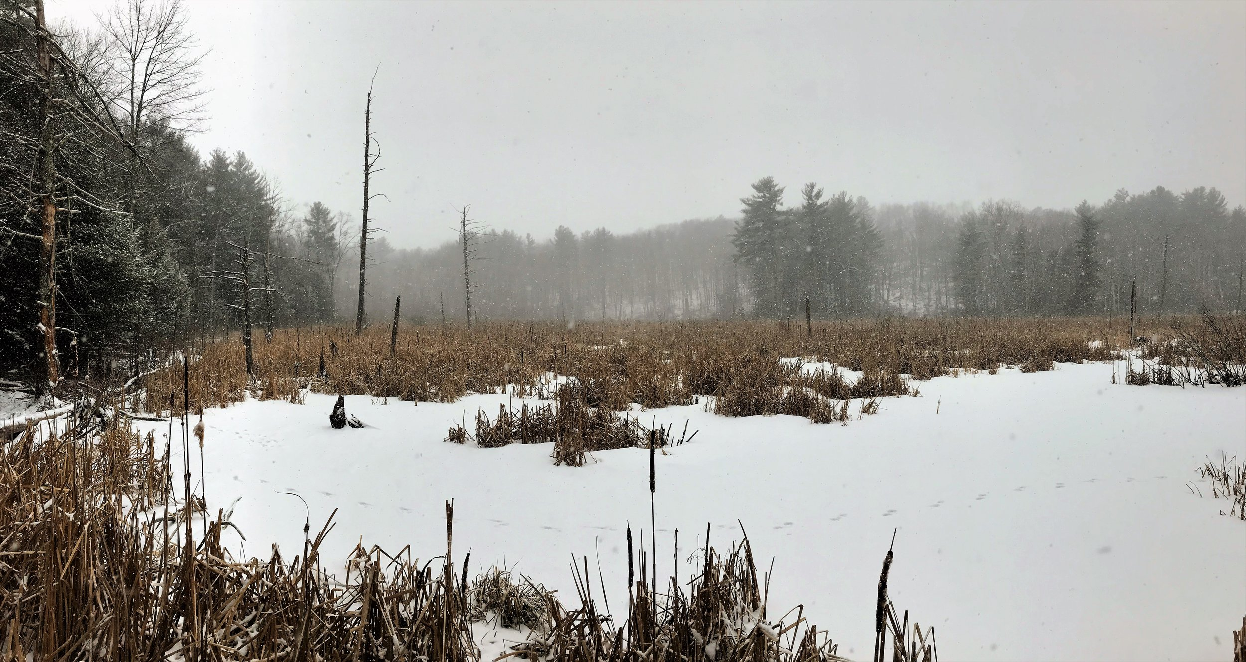 """Outlook from """"Gene's View"""" trail in winter"""