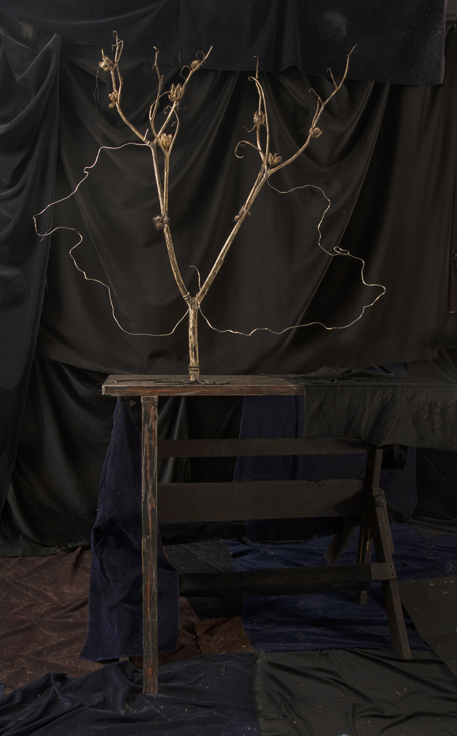 Branch With Wire Loops  2018