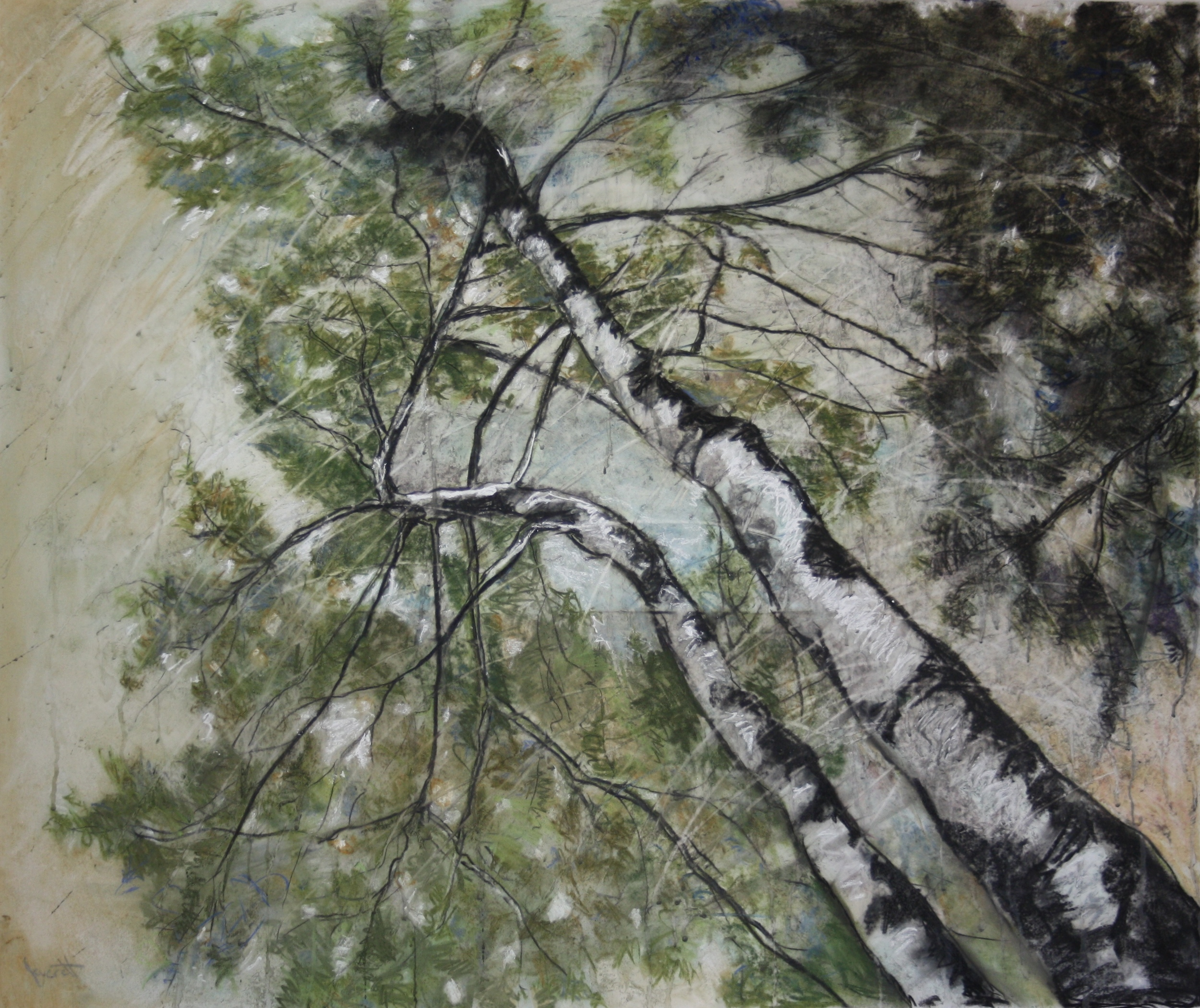 "Birches I, mixed drawing media on drafting film, 32x42"""