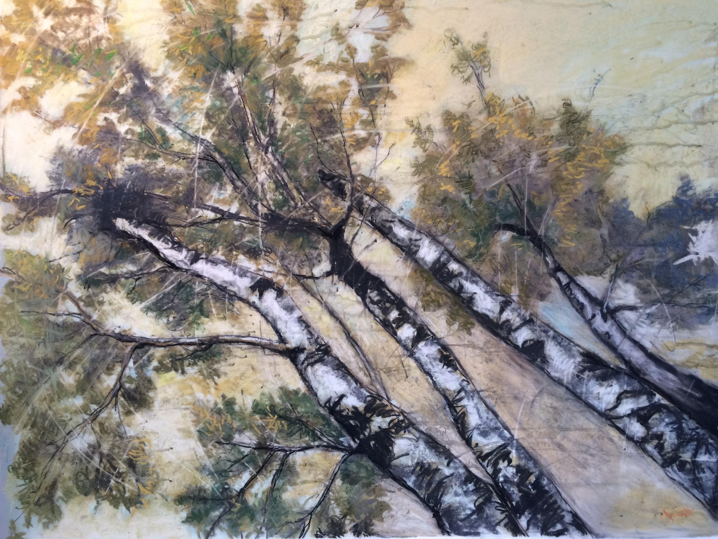 "Yellow Birches II, mixed drawing media on drafting film, 32x42"""