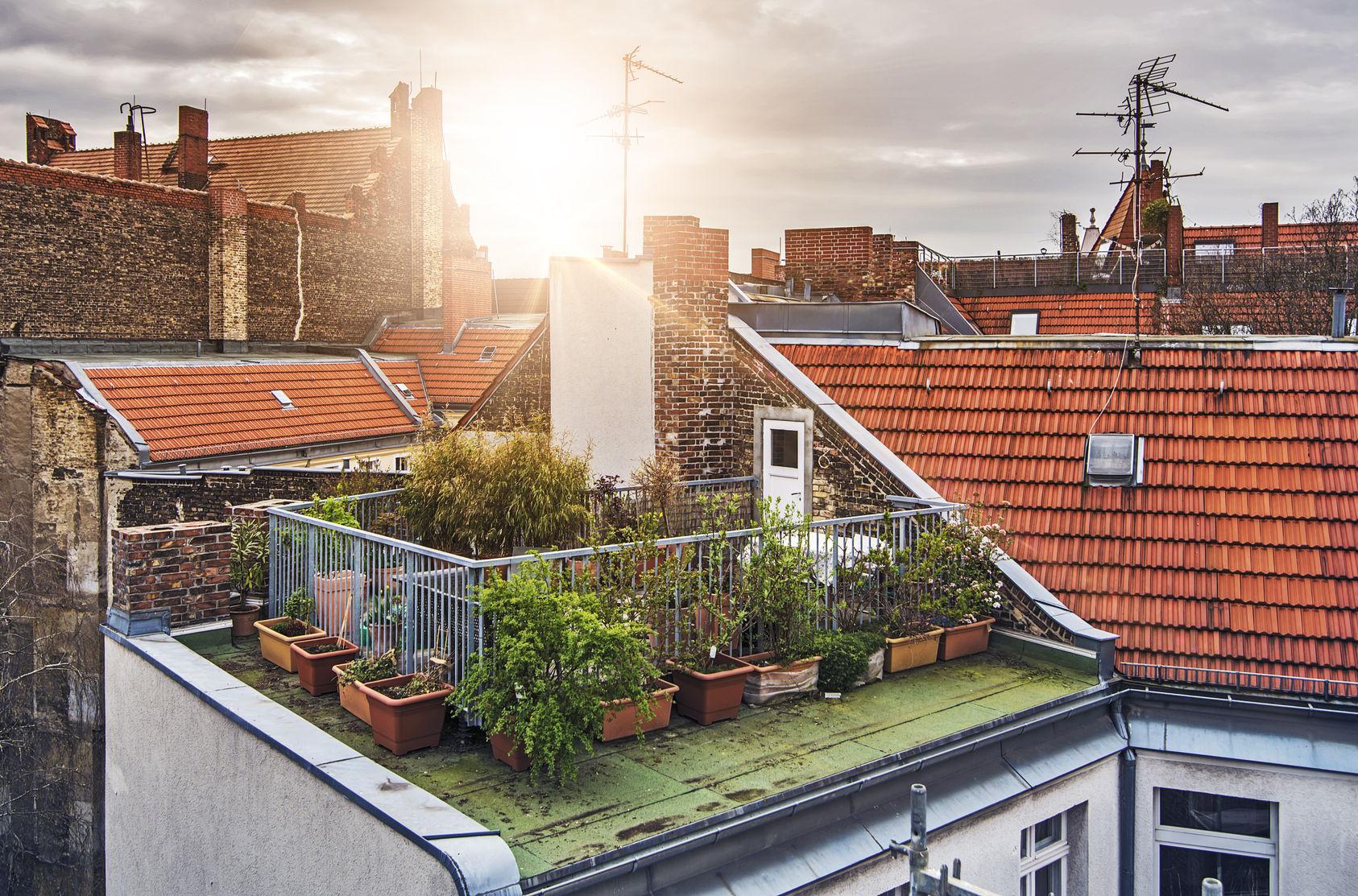 Rooftop-Garden.jpg