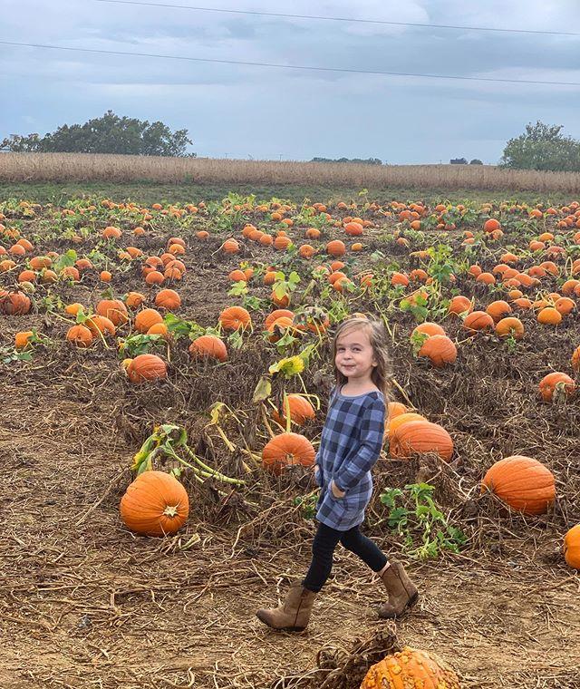 Pumpkin Patch Promenade 🎃