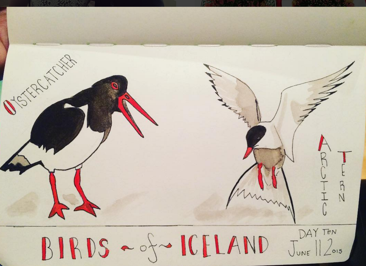 June 2016: A watercolor illustration of two commonly found birds in Iceland - the Oystercatcher and the Arctic Tern. By Ali Wunderman