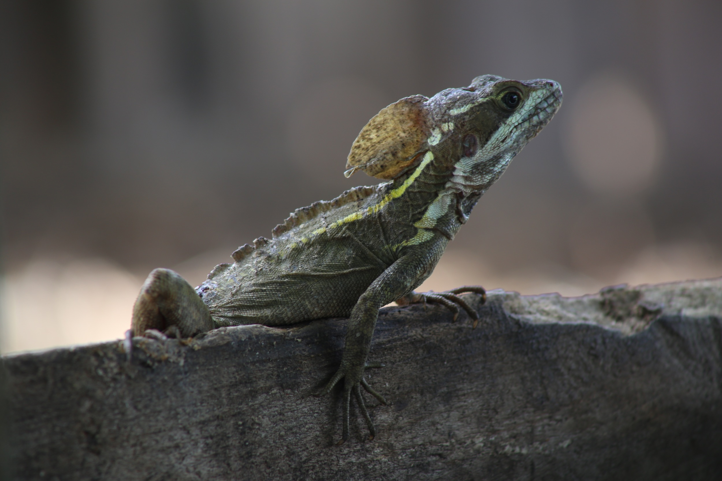 Seriously, they should call this the Babe Basilisk. Model material right here.