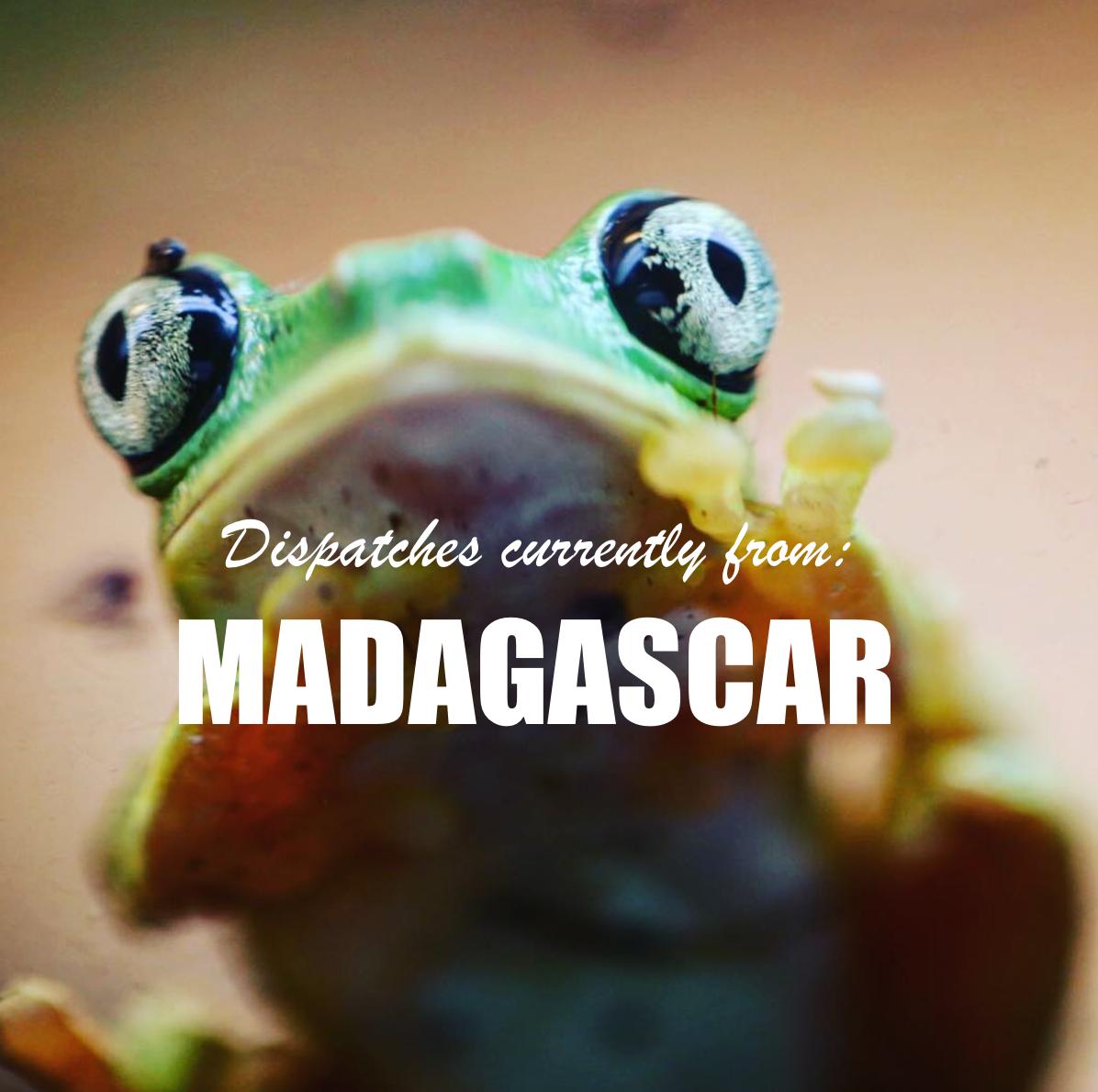MadagascarInstafrog.png