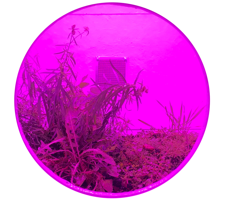 Habitat Pod (Systemata Hortensium I)