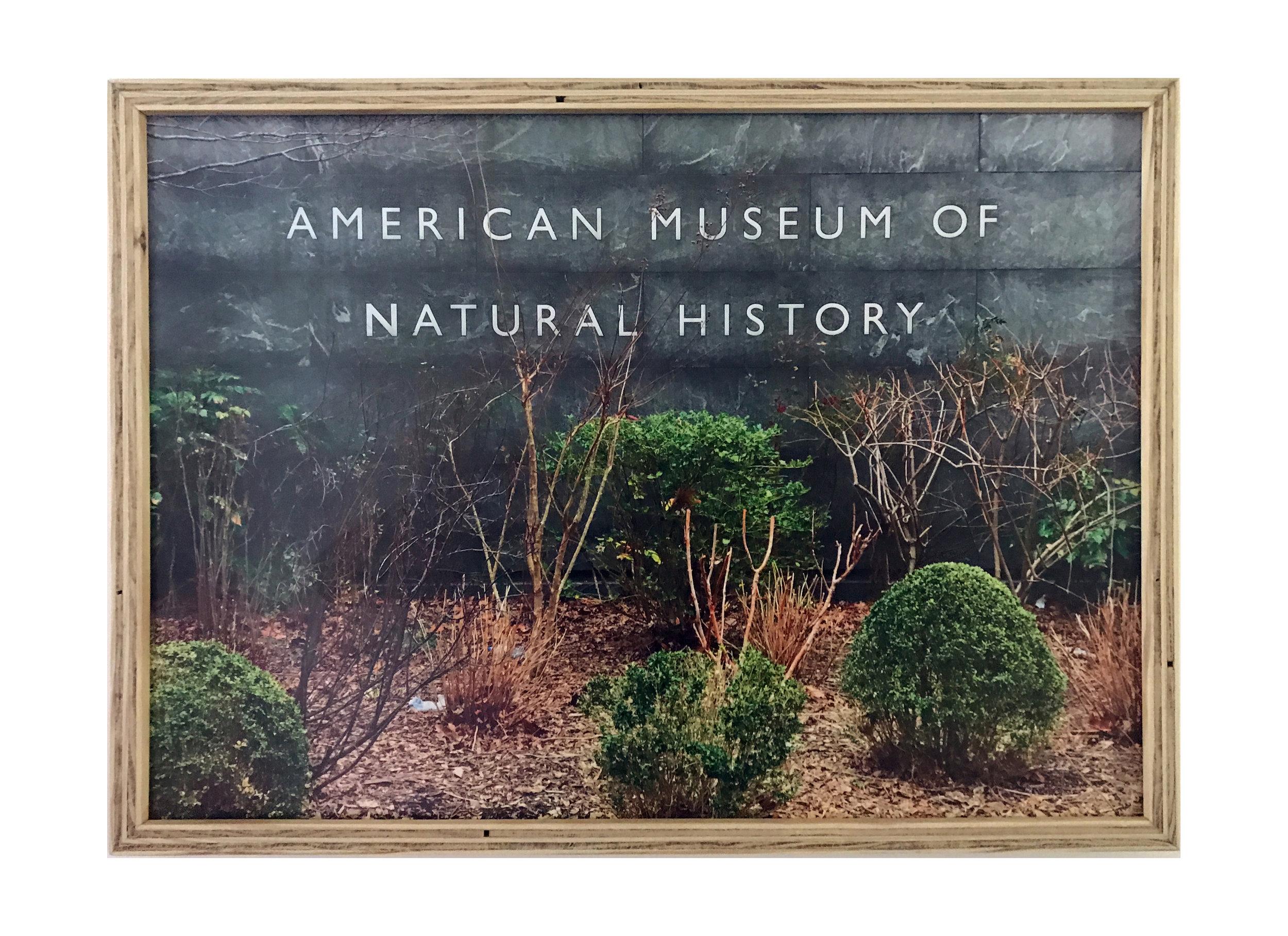 AMNH (Regulators)