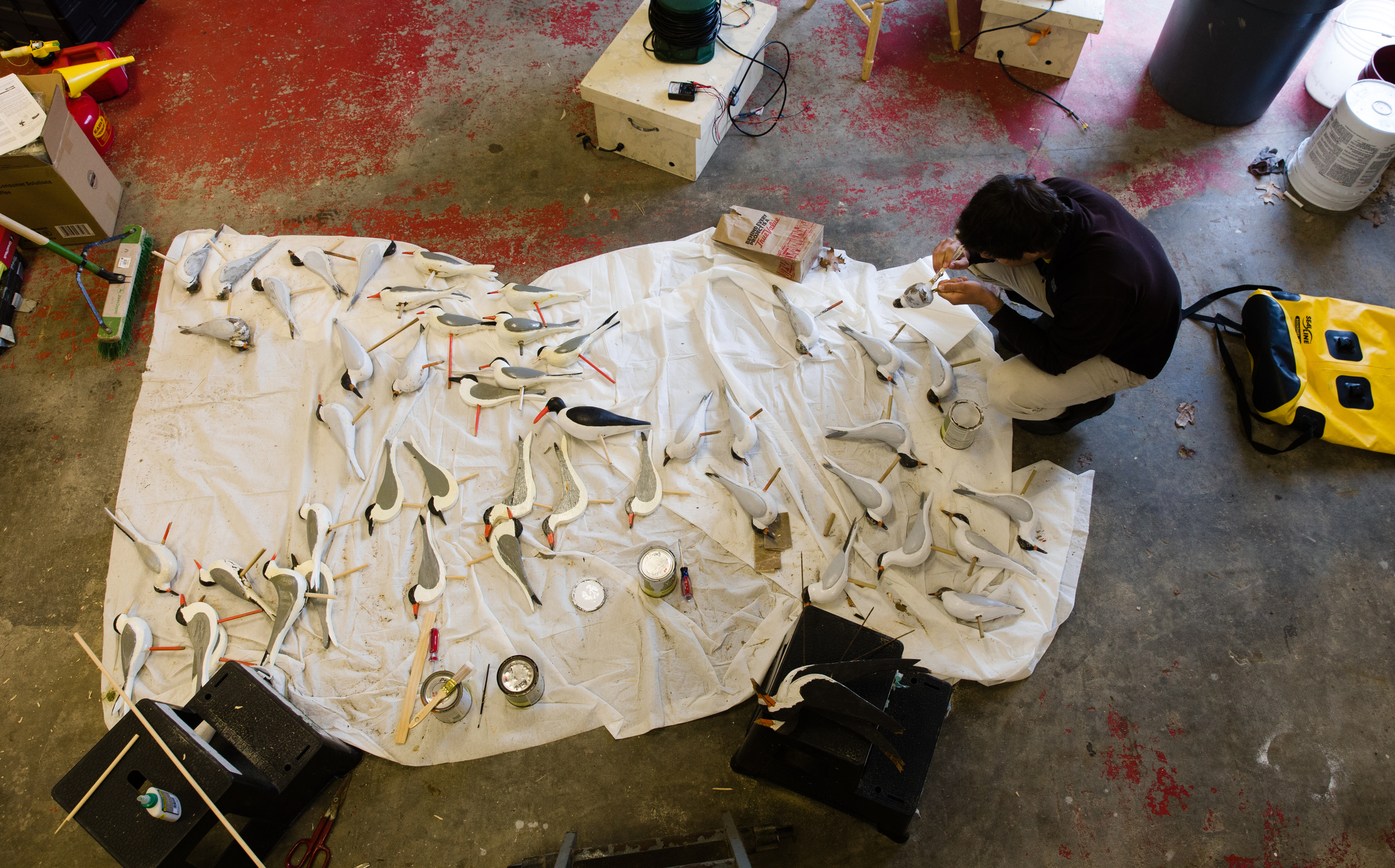 Making tern decoys, which attract real terns to nest on Monomoy
