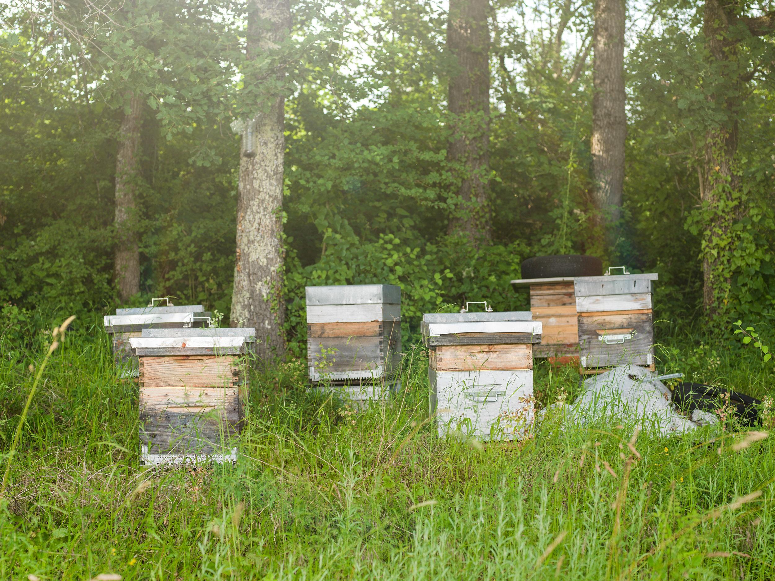 Ces ruches, situées à 100 mètres d'un verger de prune, favorisent la pollinisation.