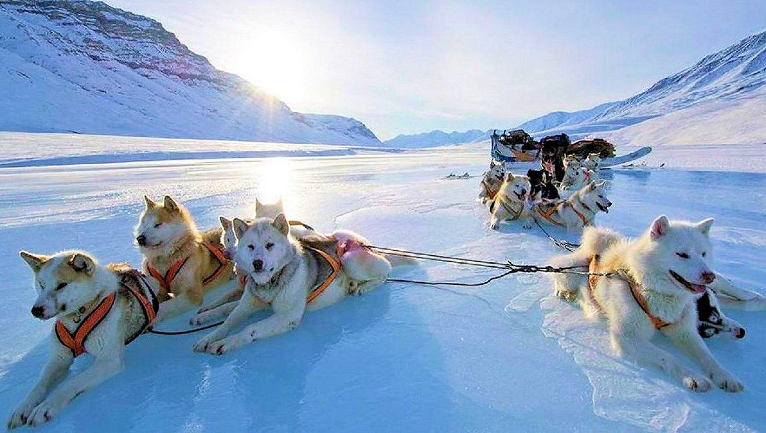 Paul's dog team.