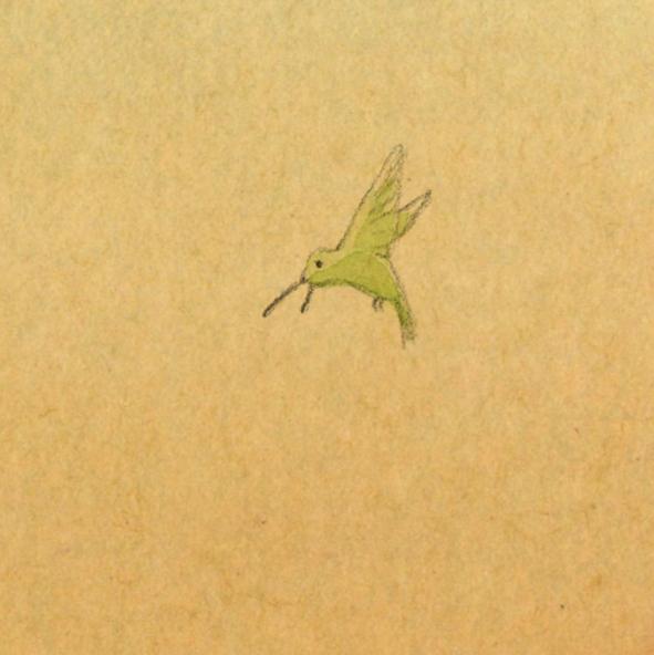 whos-shy-hummingbird-cropped.jpg