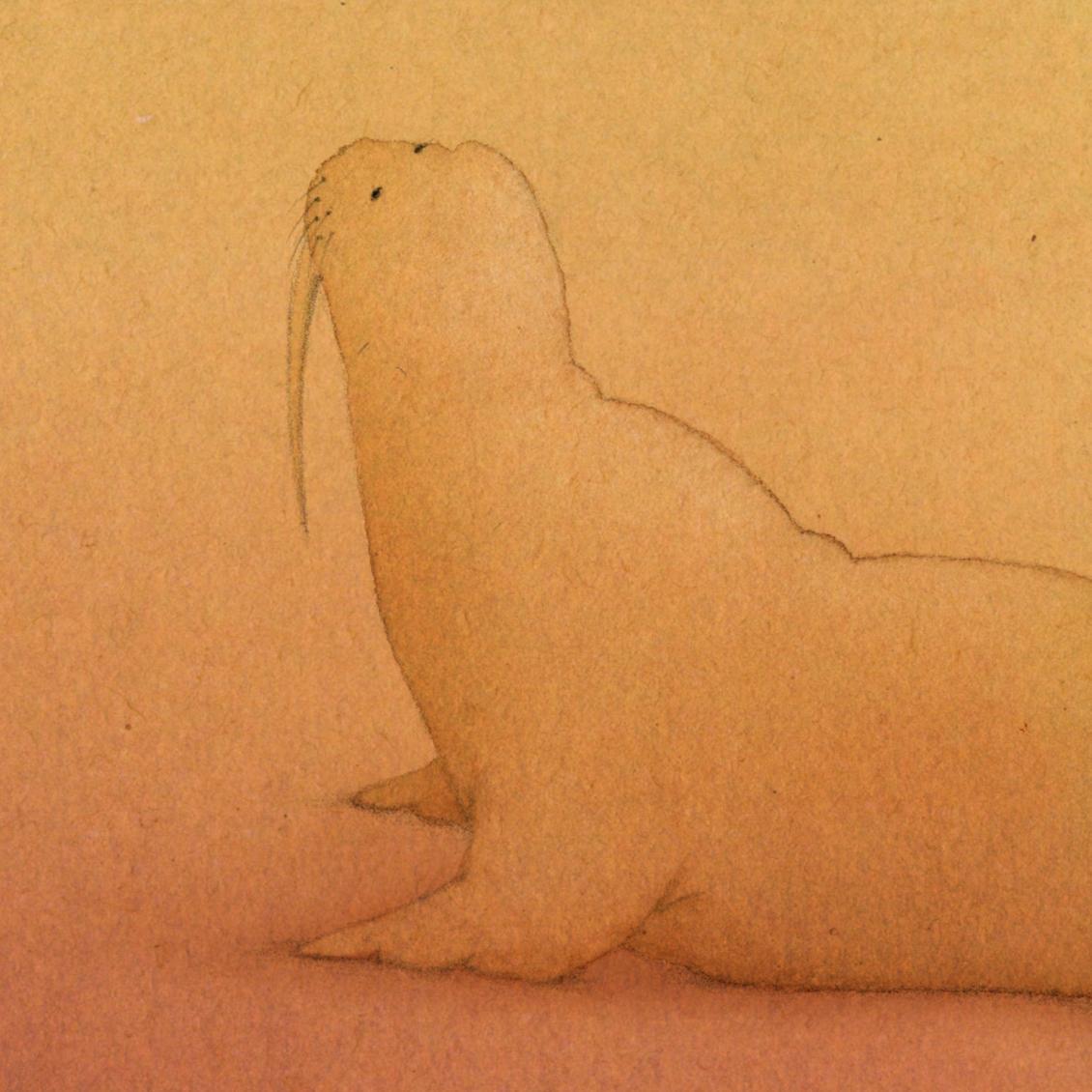 whos-shy-walrus.jpg