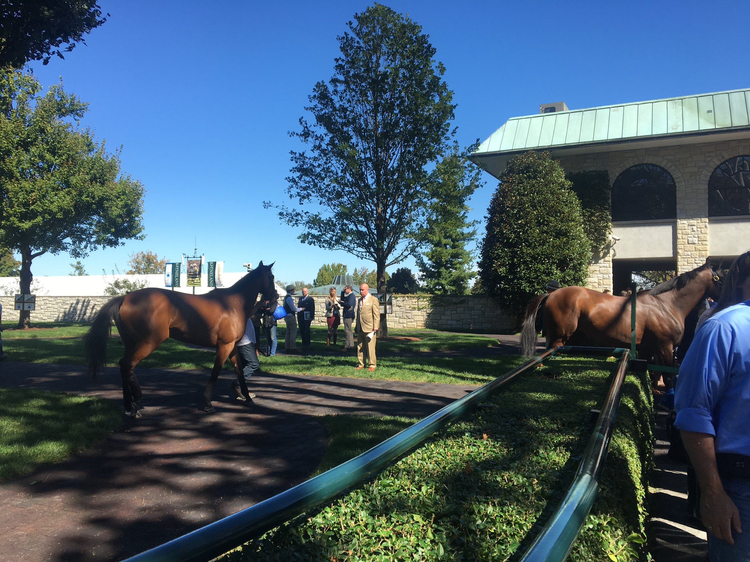They bring all the horses around the plaza to show them off. Apparently if your really serious you study their coat and their trot to analyze them for your betting.