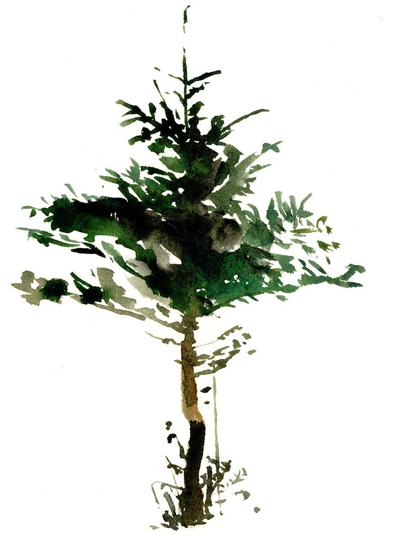 tree-fat-top.jpg