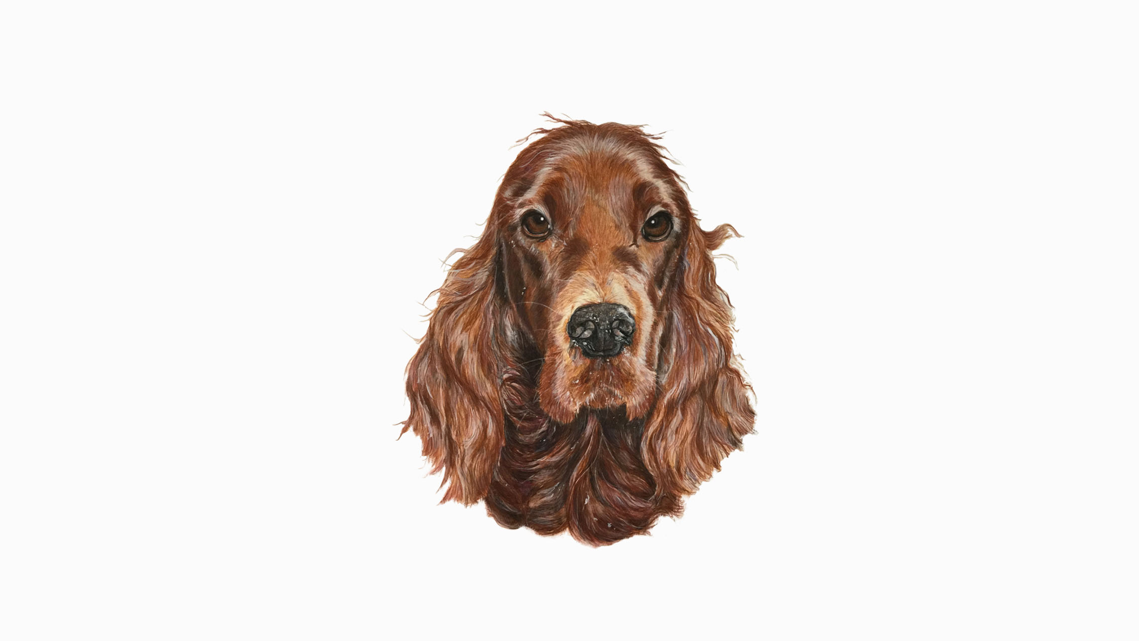 Ruby, the Red Setter