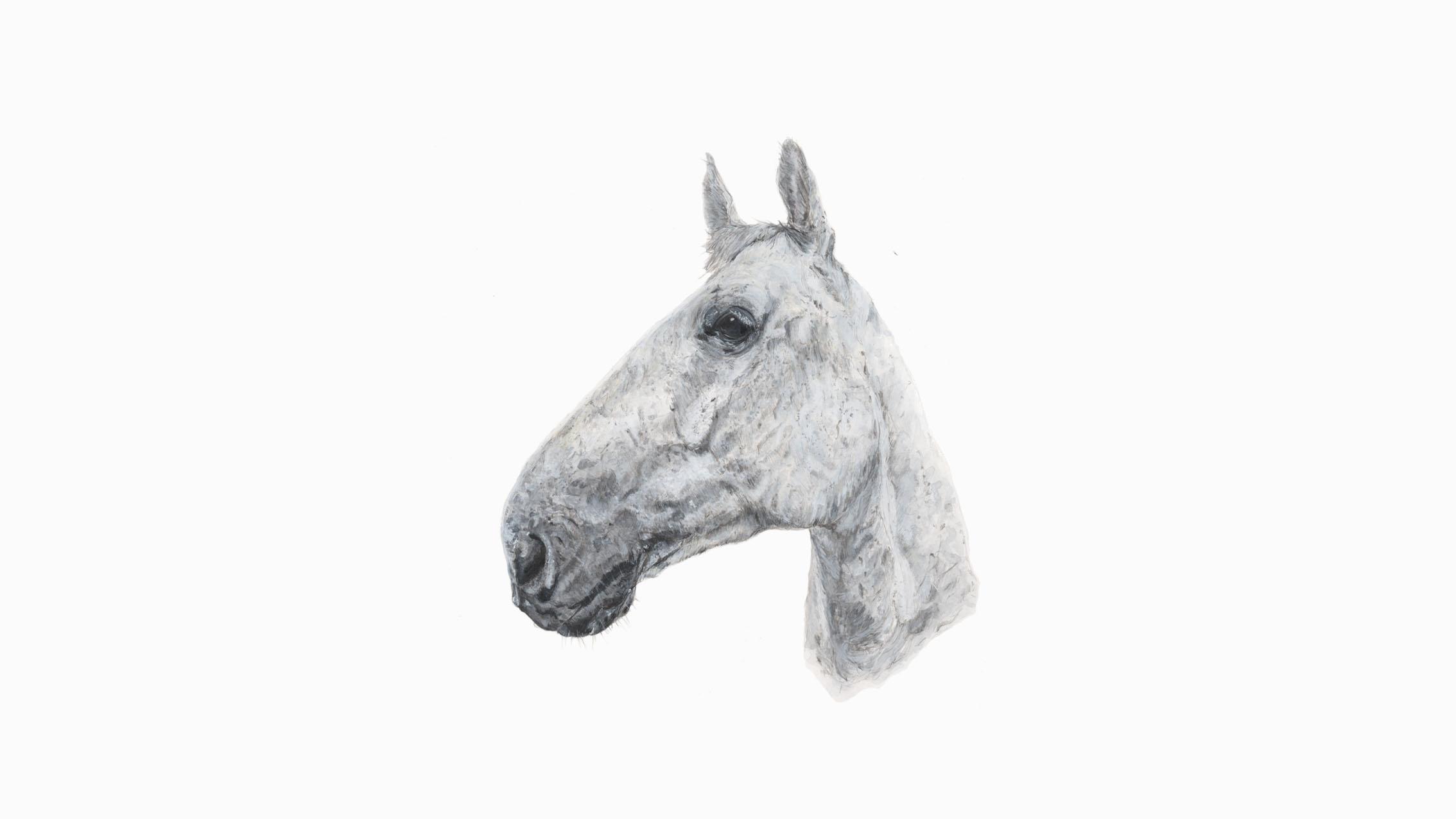 Coen, the Horse
