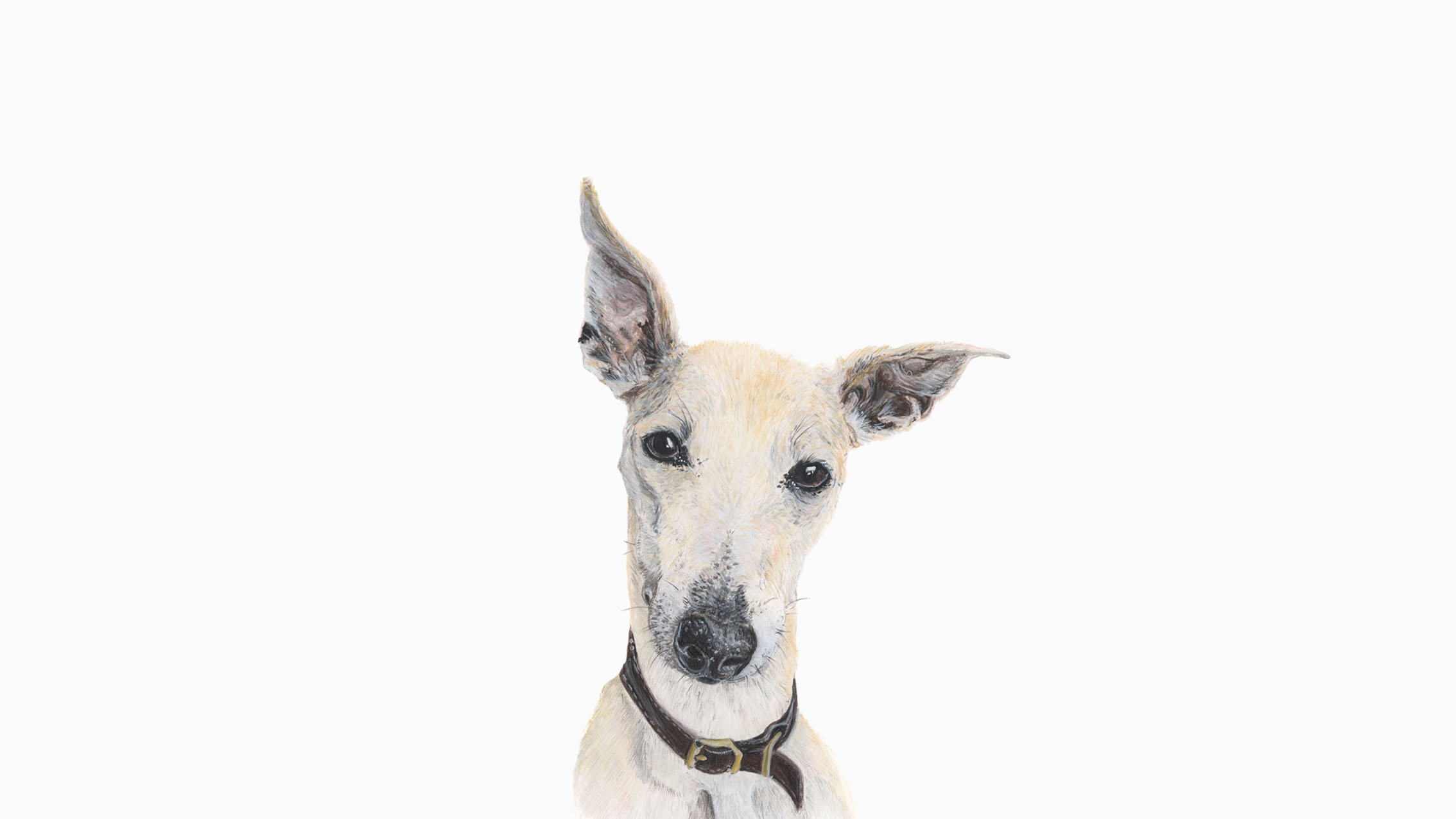 Clarence, the Whippet