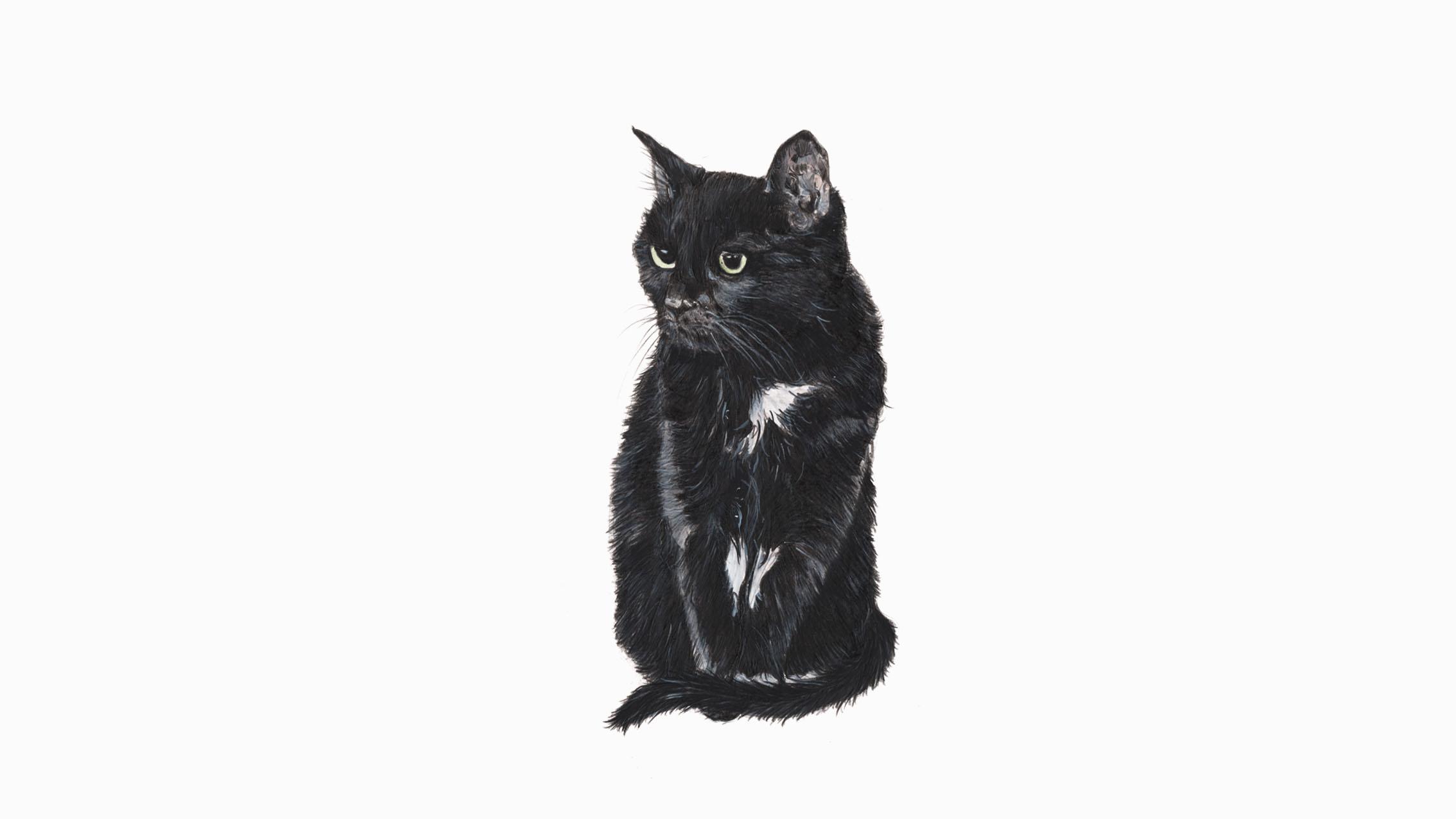 Poppy (Bob), the Black Cat