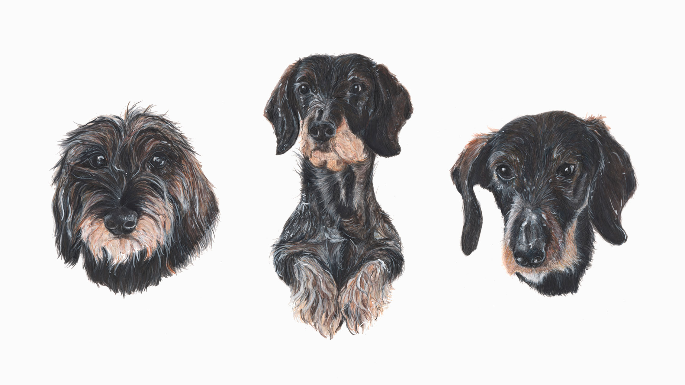 Ethel, Wispa and Goosey, Wire Haired Dachshunds