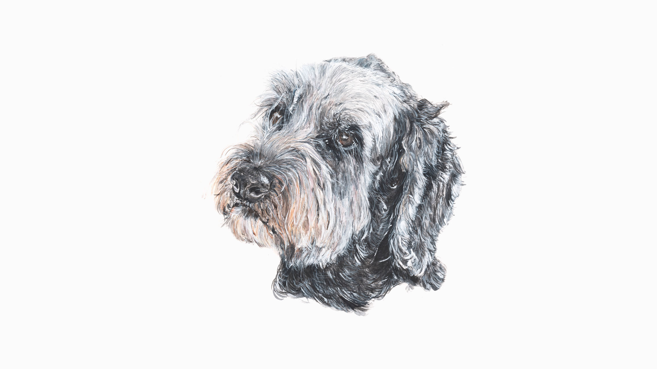 Flash, the Labradoodle