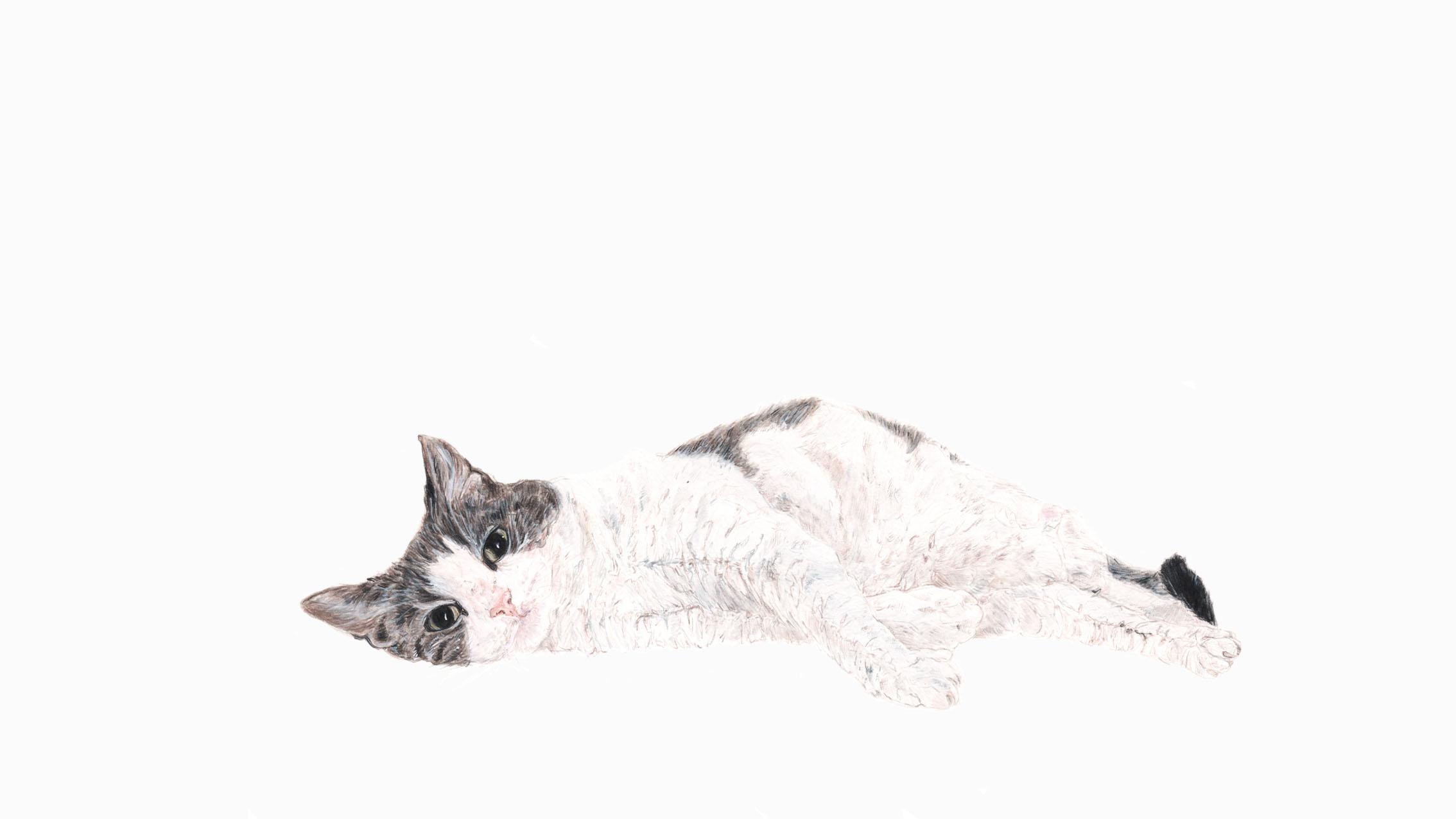 Lou Lou, the Cat