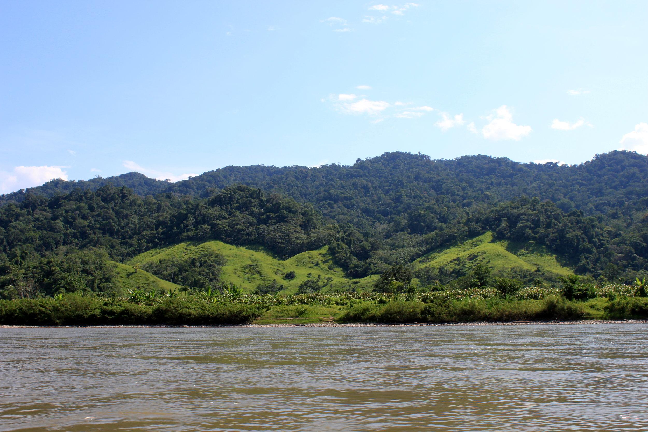 Co+op_Forest_image_river.JPG