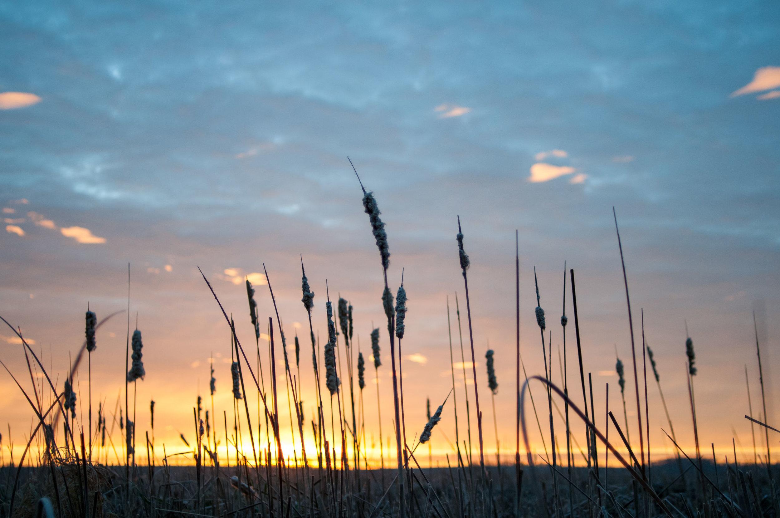 Marsh Sunrise.jpg