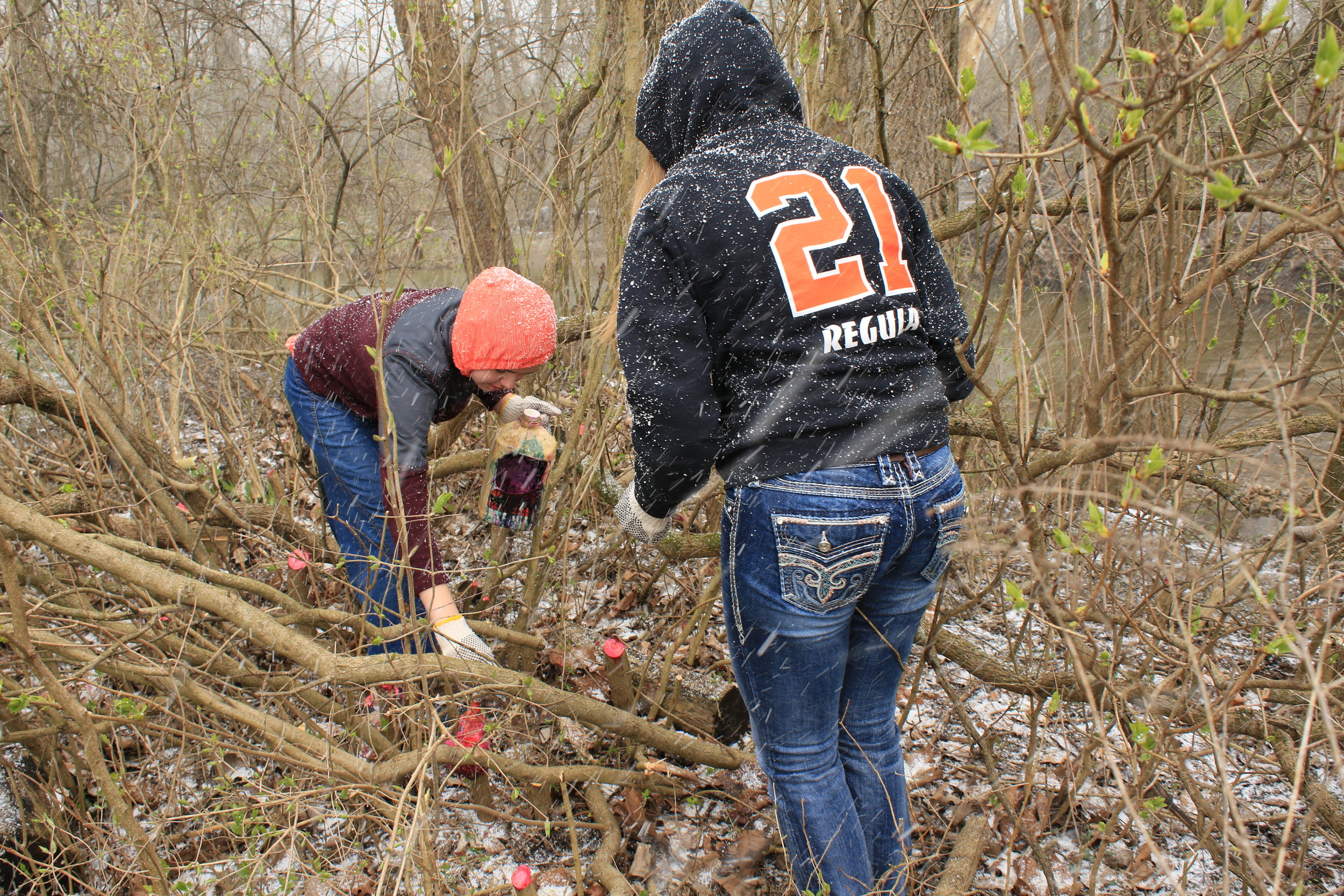 Ben Logan Enviromental Club 1st outing at Mad River  Invasive Work .JPG