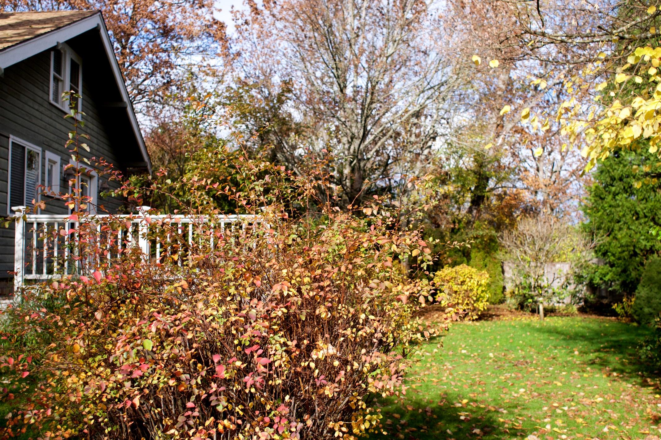 seven oaks fall 2016 2.jpg