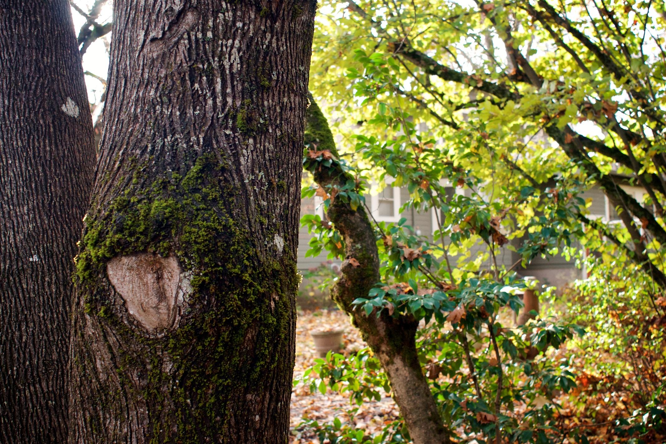 seven oaks fall 2016 4.jpg