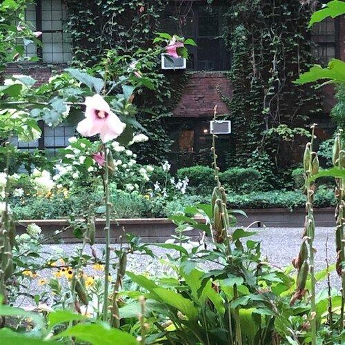 studio garden.jpg