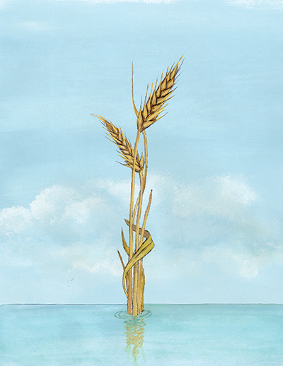 05_ocean wheat_THUMB.jpg