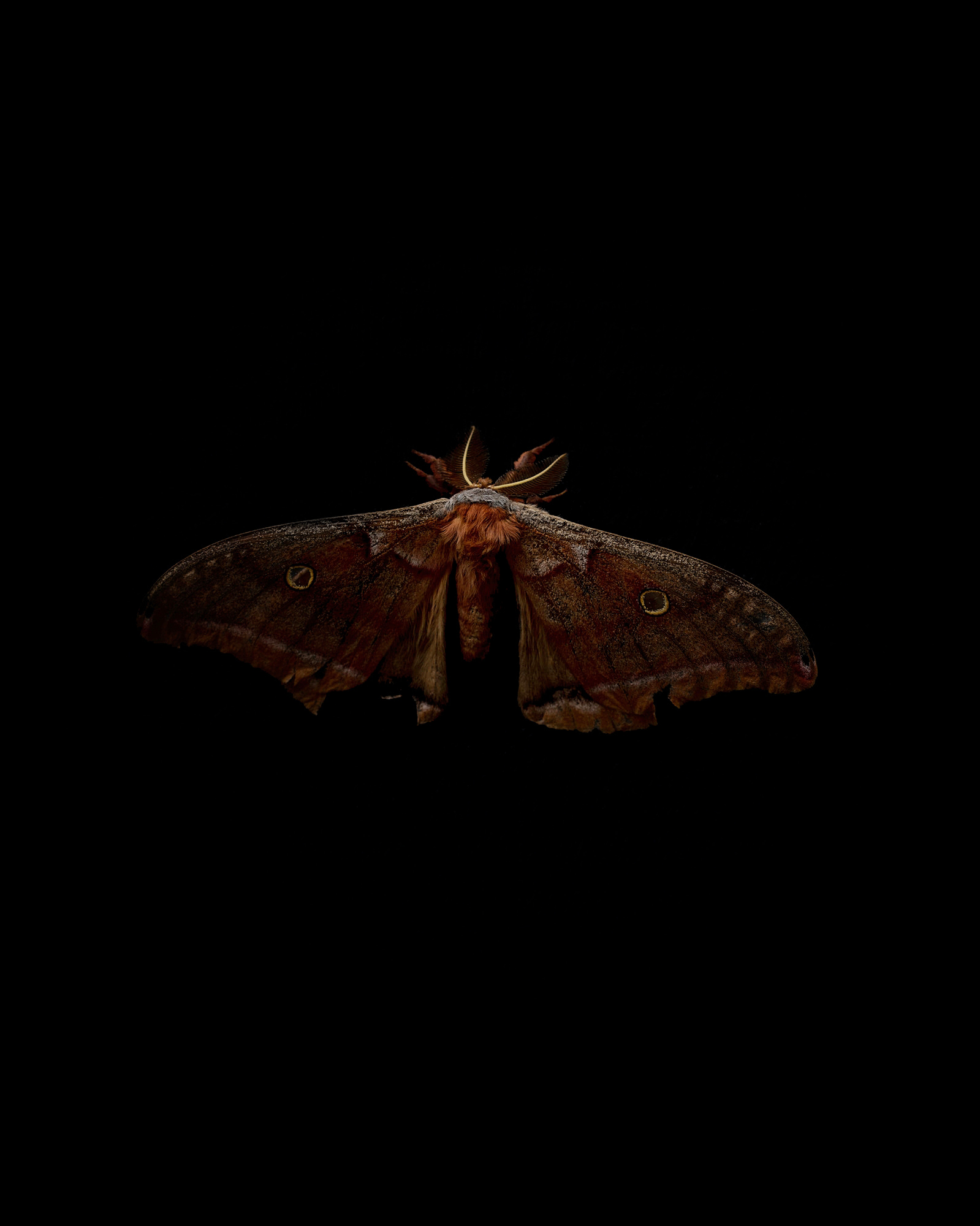 DSC_8873_moth_01.jpg