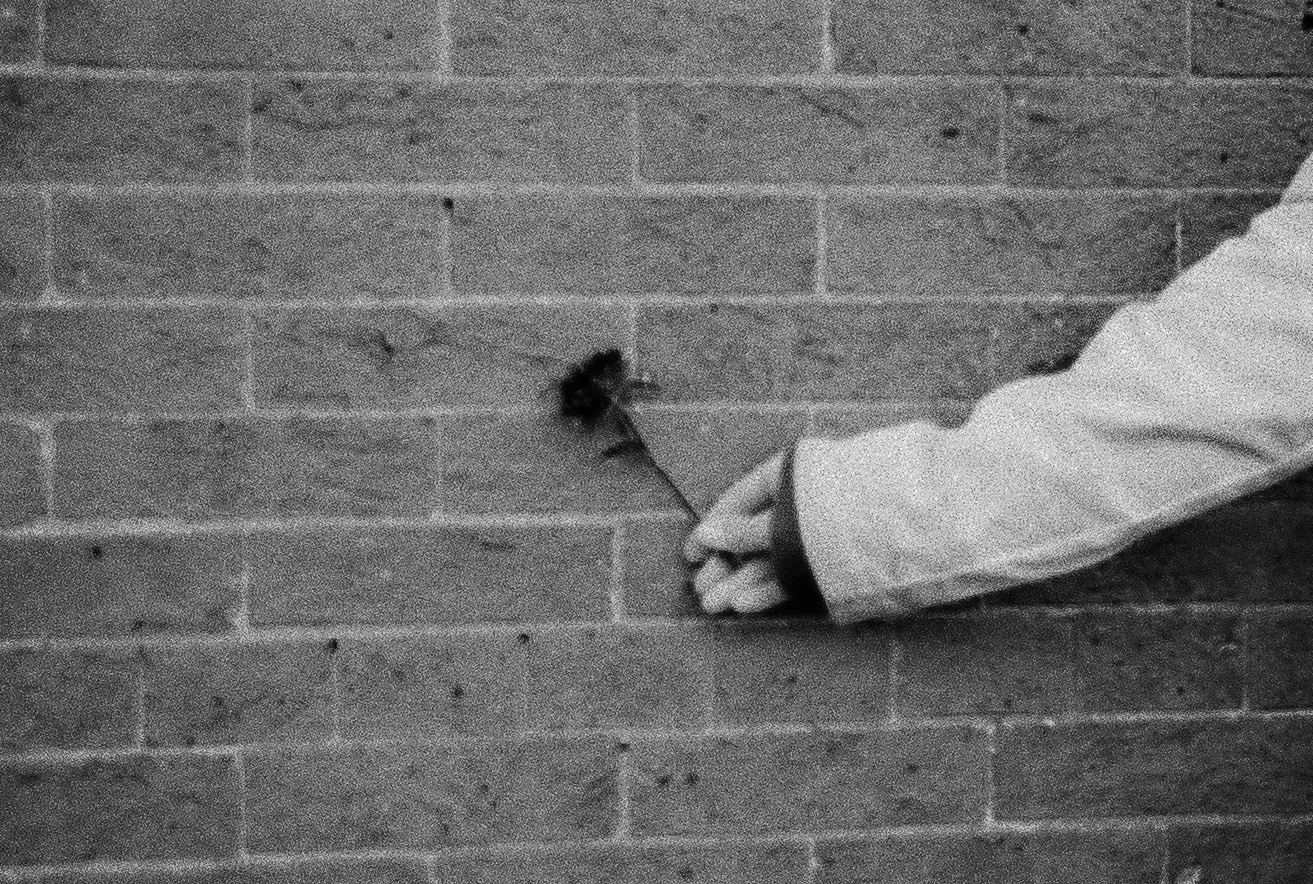 Owen's shot- he found the flower, chose the wall and instructed me on how to hold it for the photo.