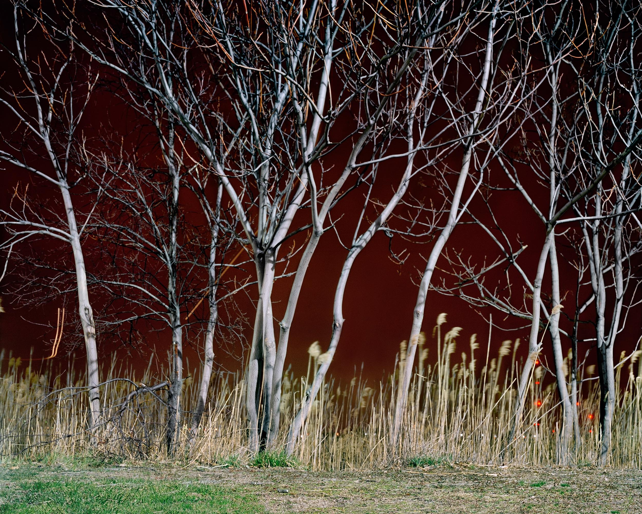 Meadowlands No. 2