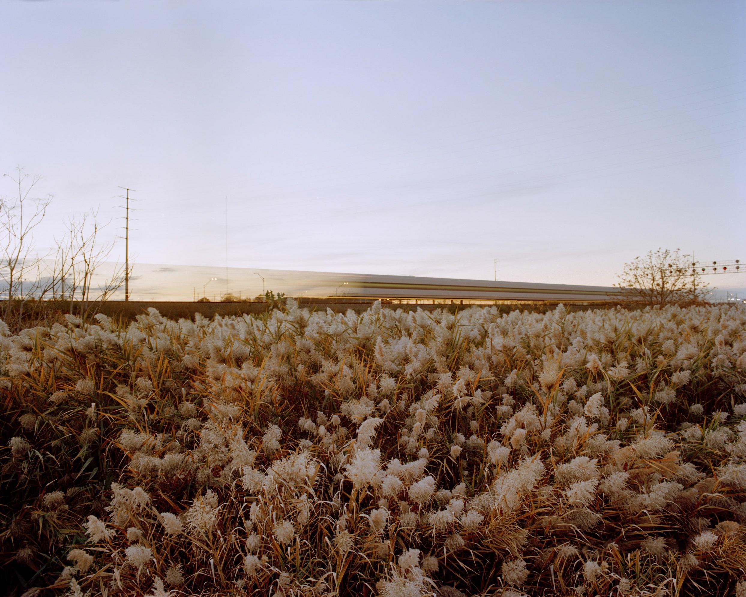 Meadowlands No. 3