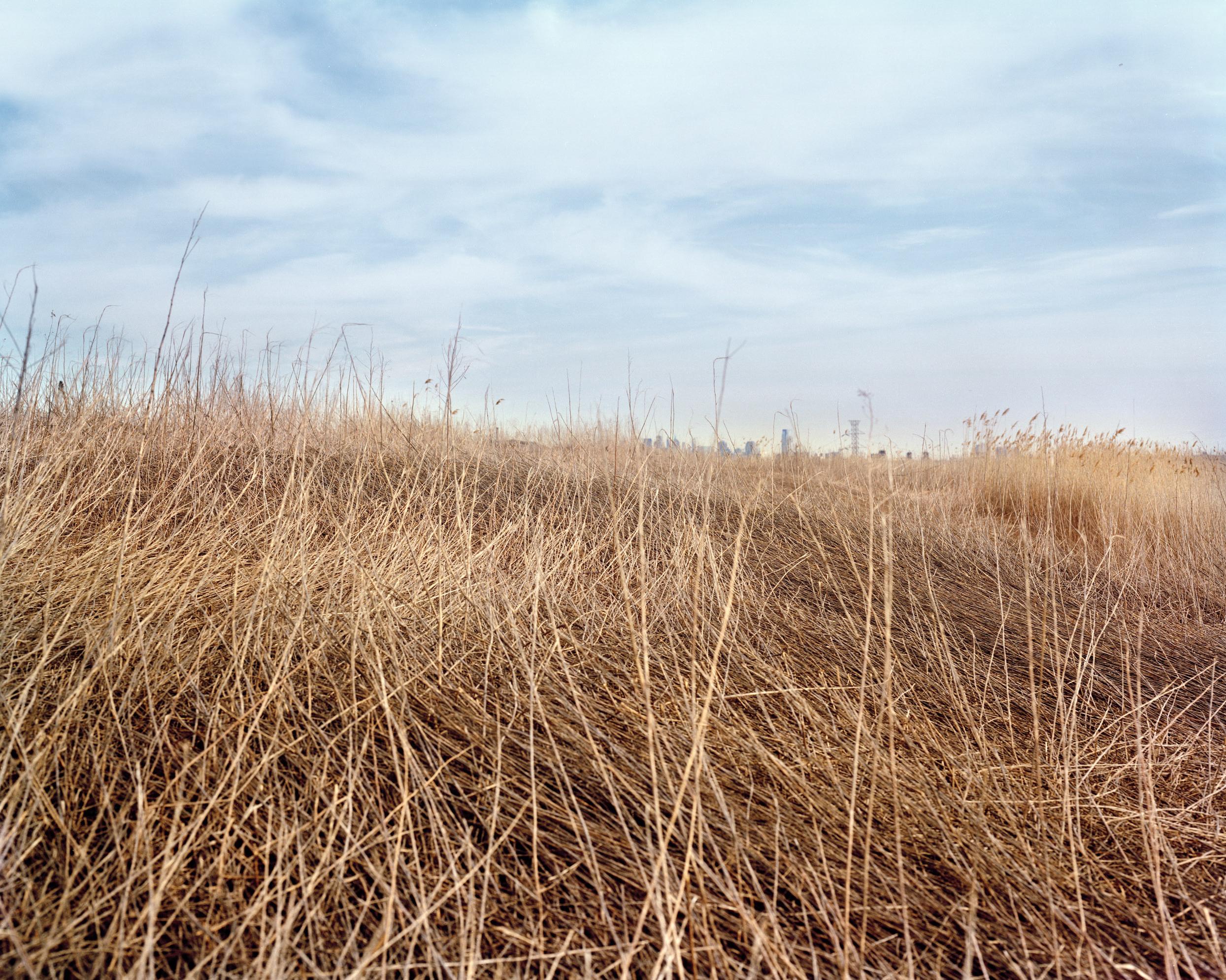 Meadowlands No. 4