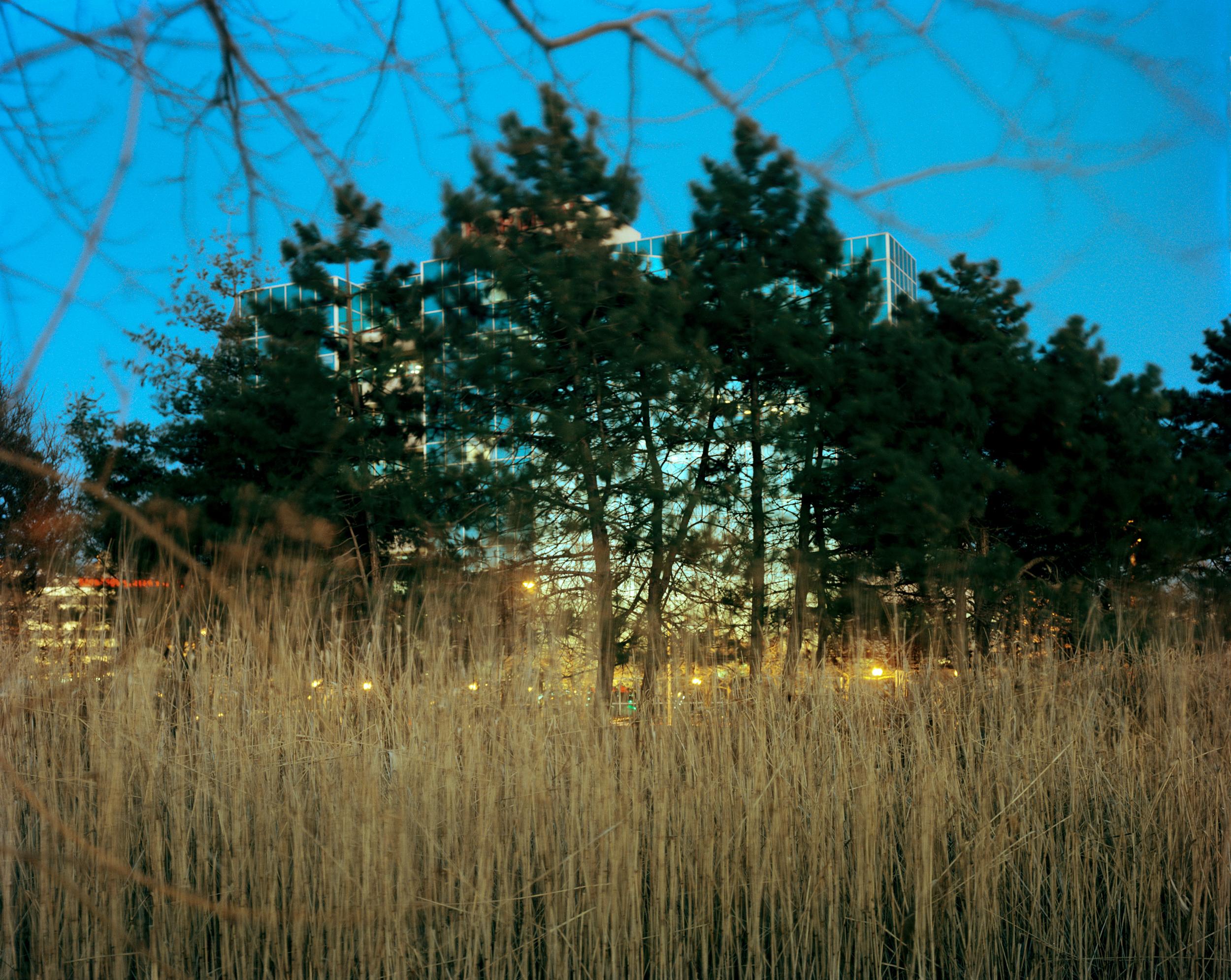 Meadowlands No. 7