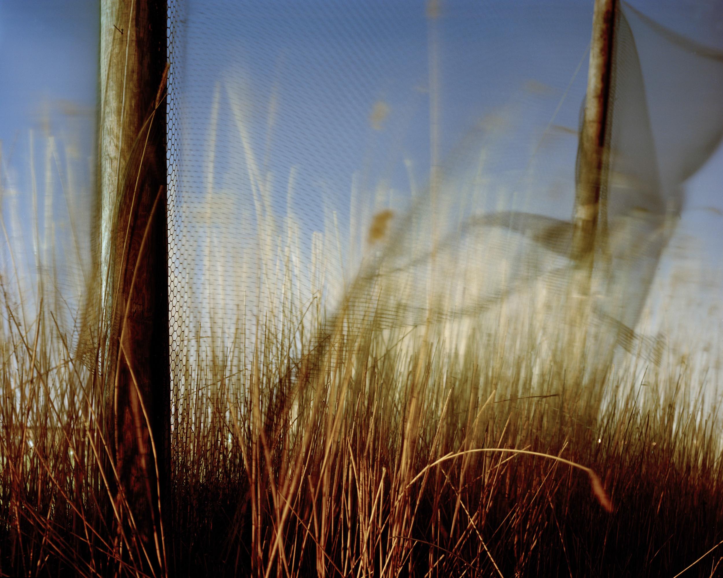 Meadowlands No. 8