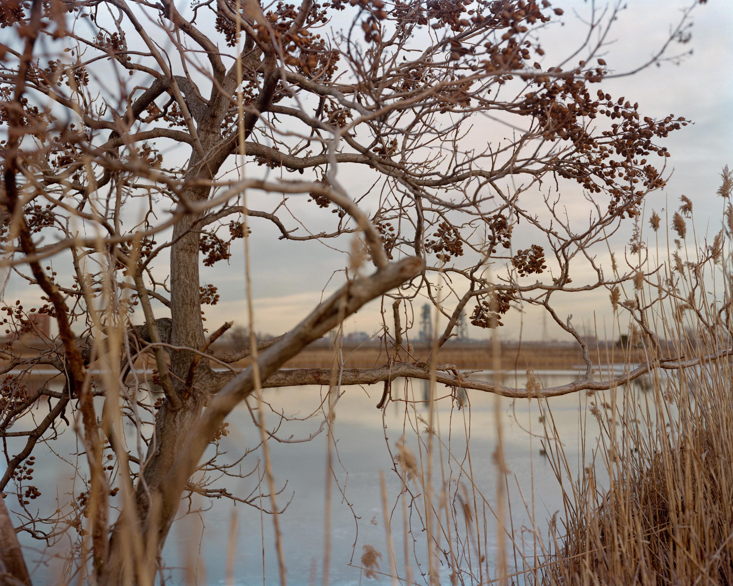 Meadowlands No. 10