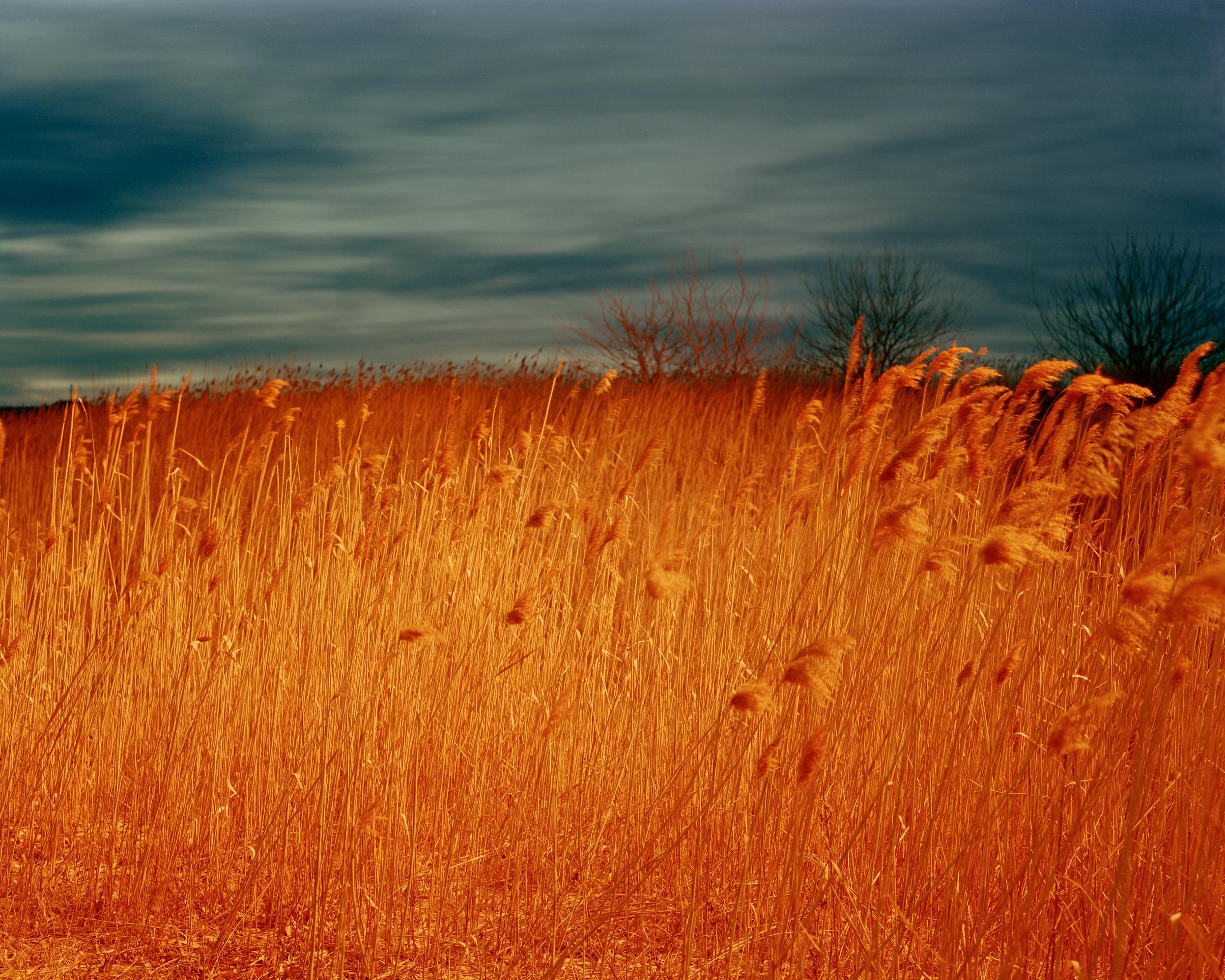 Meadowlands No. 14