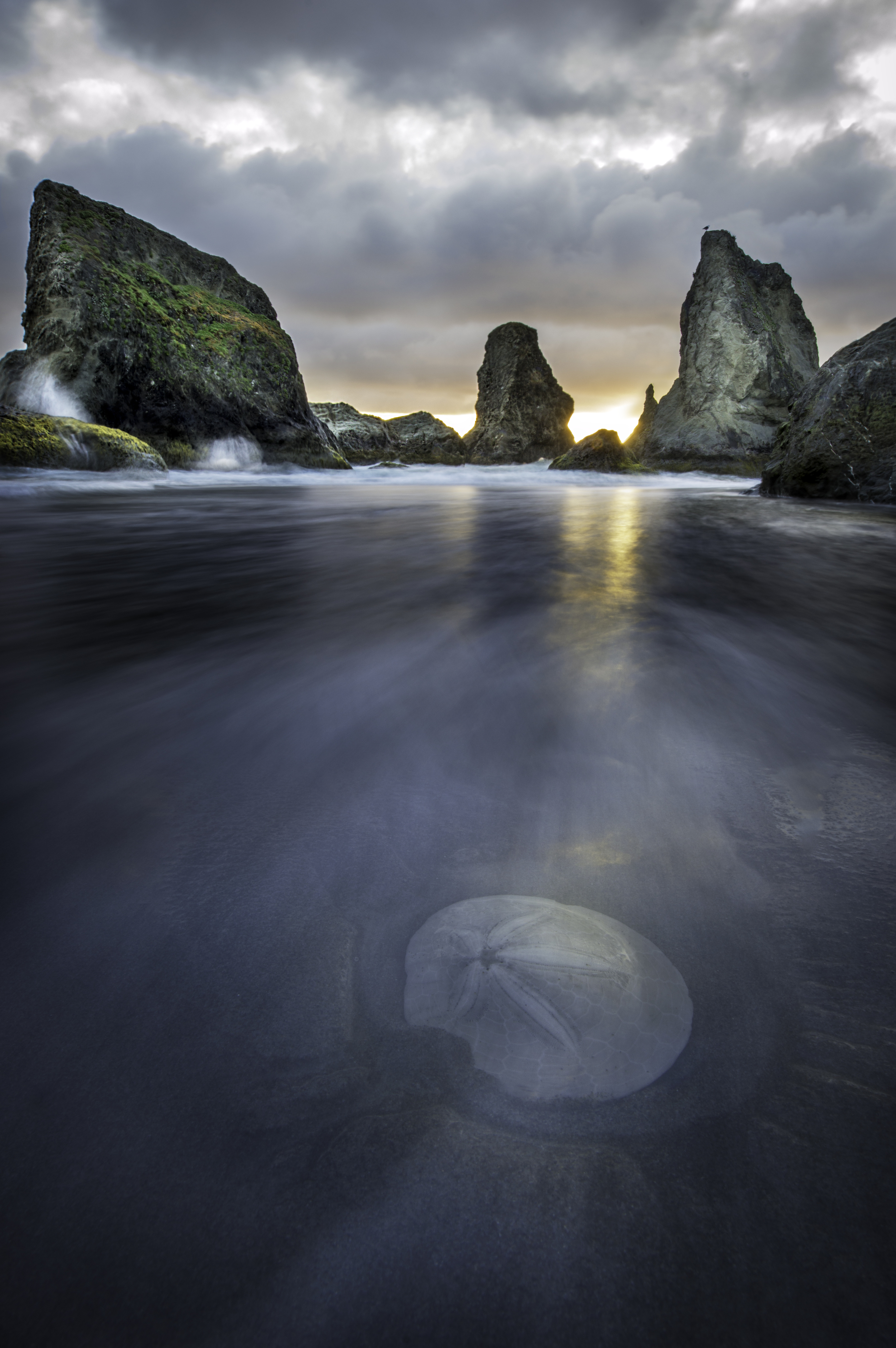 Water rushes over a sand dollar in Bandon, OR
